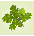 branch of oak with acorns and leaves natural vector image