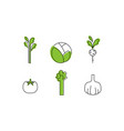 fresh vegetables line icons set cabbage greenery vector image vector image