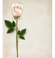 White rose on paper background vector image vector image