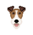 fox terrier dog head in pixel art style vector image