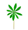naturalistic colorful lupine leaf on white vector image vector image