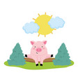 pig in the farm vector image