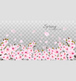 branches of a blossoming sakura on transparent vector image vector image