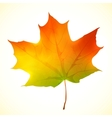 Isolated autumn bright maple leaf vector image vector image