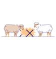sheeps eating hay flat livestock farming animal vector image vector image