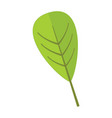 Reticulate floral leaf graphic