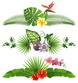 tropical borders vector image vector image