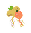 turnip varieties fresh vegetable organic vector image vector image