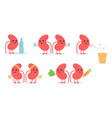 cartoon doodle kidney characters vector image