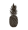 pineapple black and white vector image vector image