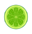 sliced colored sketch style fruit lime vector image vector image