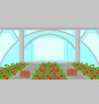 strawberry plantation in greenhouse vector image vector image