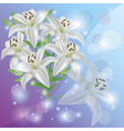 white lily flower background greeting vector image