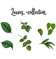 set of realistic green leaves collection isolated vector image