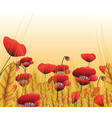 Poppy lawn with wheat vector image