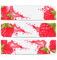 cards or labels with realistic raspberries and a vector image vector image