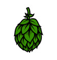 beer hop in engraving style design element vector image vector image