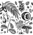 exotic nut seamless pattern with hand drawn vector image vector image