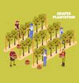grapes plantation isometric vector image vector image