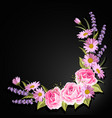 beautiful pink roses and lavender flowers on black vector image vector image