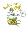 Bottle with olive oil isolated objects vector image vector image
