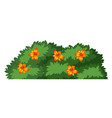 isolated flower bush on white background vector image