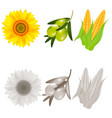realistic sunflower corn and olives vector image