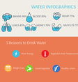 Water in Human Body Infographics vector image vector image