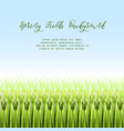 with stylized green rice vector image vector image