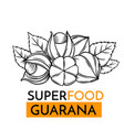 icon superfood guarana vector image vector image