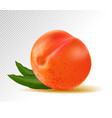 realistic ripe peach with leaf on white background vector image vector image