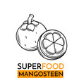 icon superfood mangosteen vector image vector image