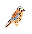 kestrel bird isolated vector image vector image