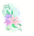 Lilies flowers vector image