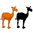 set of camel character vector image vector image