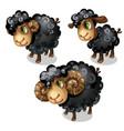 white sheep animal in cartoon style vector image