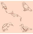 Birds Pencil sketch by hand Vintage colors vector image vector image