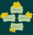 narcissus flower card element vector image vector image
