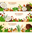 banners of nuts and fruit seeds vector image vector image