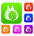 fig fruit set color collection vector image vector image