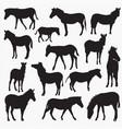 zebra silhouettes vector image vector image