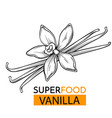icon superfood vanilla vector image vector image