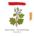 medicinal herbs of china eastern rhubarb rheum vector image vector image