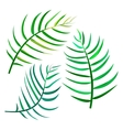Set of palm leaves on white background vector image