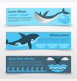 wild whales banners template vector image