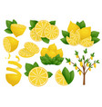 set lemon slice on white vector image