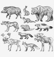 set of wild animals brown grizzly bear forest vector image vector image