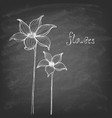 sketch hand-drawn flowers on a chalk-board vector image