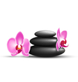 Stack of spa stones with orchid flowers isolated vector image