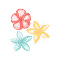 frangipani flowers on white background in hand vector image